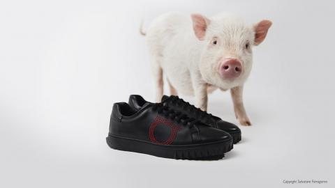 Salvatore Ferragamo Shoot featuring Petpiggies micro pigs