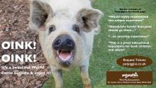 #pigzoo - Mini Pig Encounters by Petpiggies