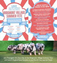 Petpiggies micro pigs at the Ridgmont Village Summer Fete