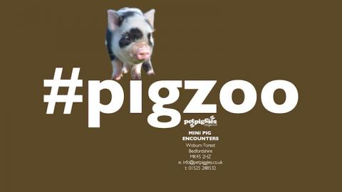 #pigzoo at woburn forest