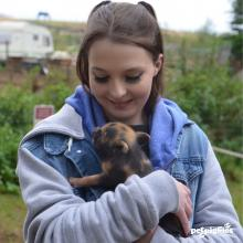 baby-pigs-#pigzoo-woburn-forest