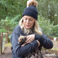 woburn-forest-pigzoo-baby-mini-pigs