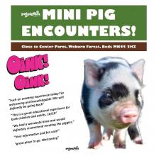 micro-pig-experience-near-woburn-forest-center-parcs